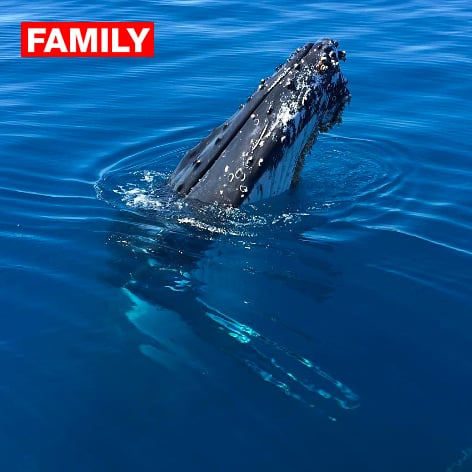 Whale Watching Tour on Hervey Bay Qld
