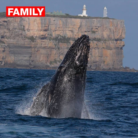 Bring the family on a Whale Watching Cruise in Jervis Bay on the South Coast of NSW.