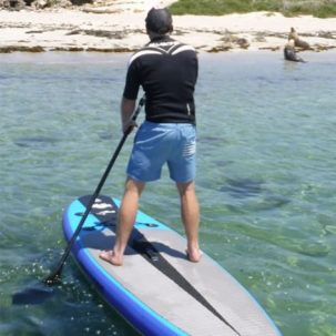 Stand up paddle and sea lion experience