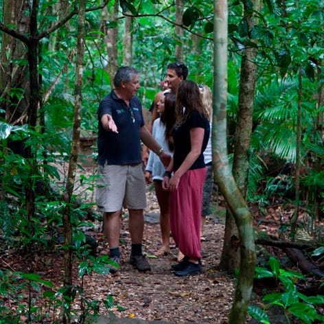 Daintree Rainforest Tour from Port Douglas QLD